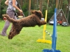 barbet-agility-62-of-139