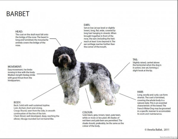 barbet-diagram