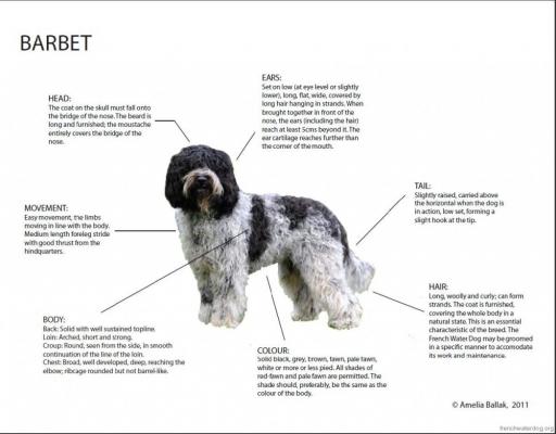 barbet diagram