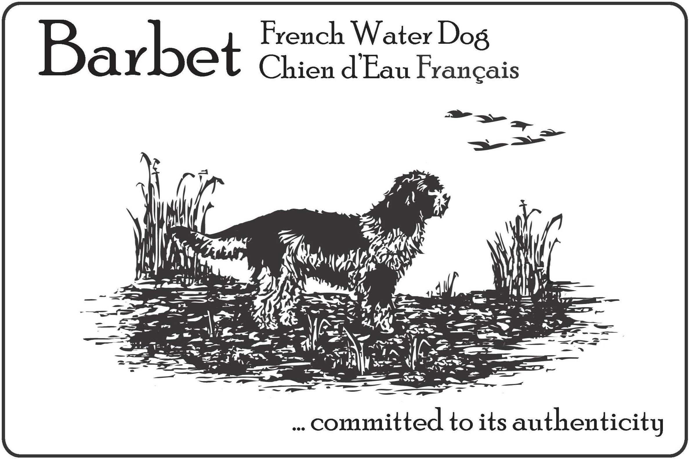 Barbet: French Waterdog